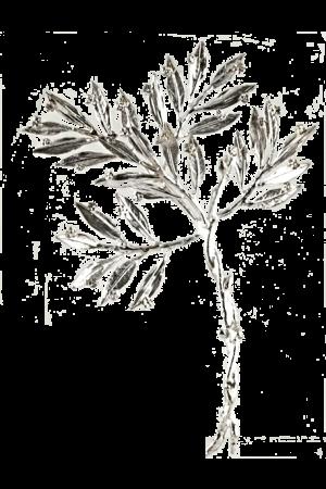 ΜΥΡΤΙΑ ΑΠΟ ΟΡΕΙΧΑΛΚΟ ΕΠΑΡΓΥΡΗ ΣΕ ΠΛΑΤΗ PLEXI-GLASS (ΦΧ 000051)